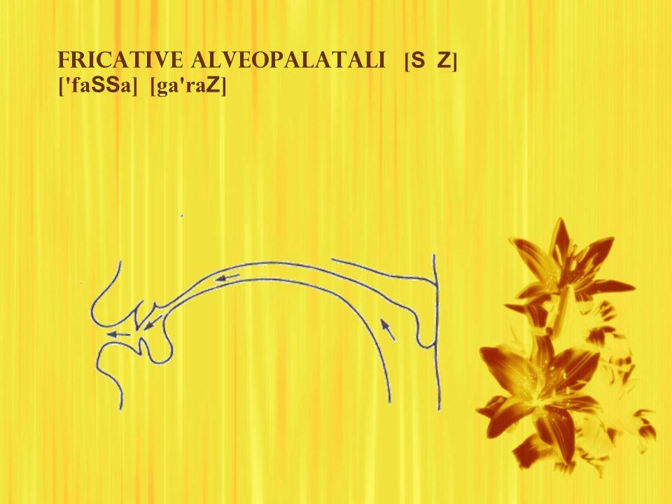 Fricative alveopalatali [S Z] [ faSSa] [ga raZ]